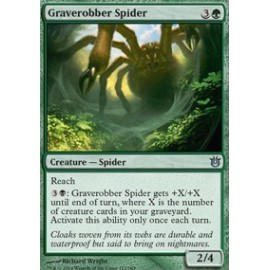 Graverobber Spider