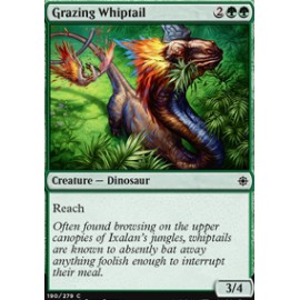 Grazing Whiptail