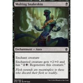 Molting Snakeskin